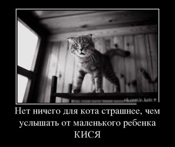 http://s2.uploads.ru/pmhrz.jpg