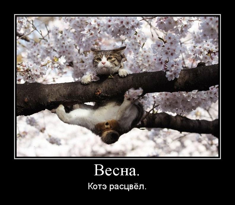 http://s2.uploads.ru/r8yDP.jpg