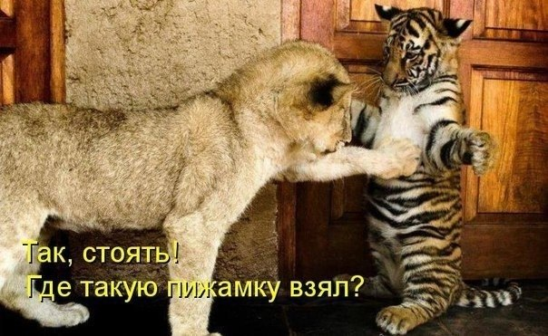 http://s2.uploads.ru/rRh4c.jpg