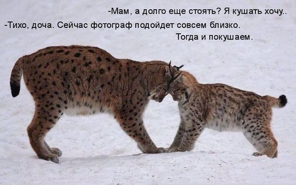 http://s2.uploads.ru/rW0dk.jpg