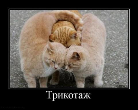 http://s2.uploads.ru/s2Iuw.jpg