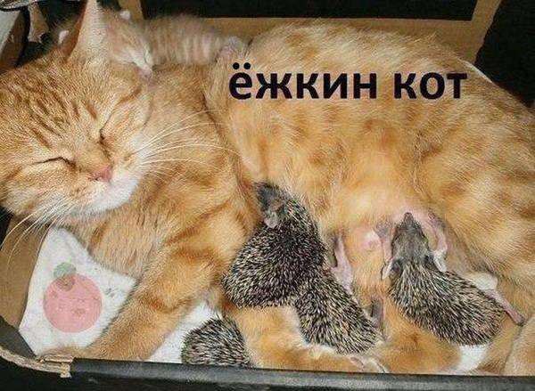 http://s2.uploads.ru/t/1BfG5.jpg