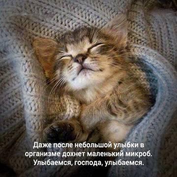 http://s2.uploads.ru/t/1aISM.jpg