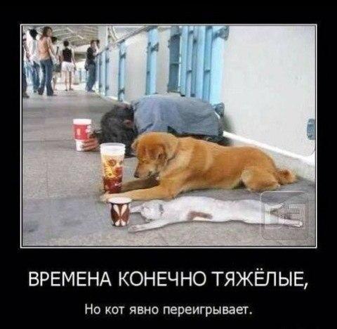 http://s2.uploads.ru/t/38rWc.jpg