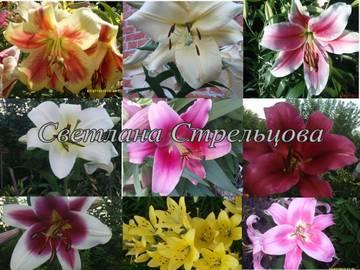 http://s2.uploads.ru/t/3IAUZ.jpg