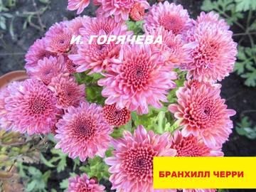 http://s2.uploads.ru/t/3OsL6.jpg