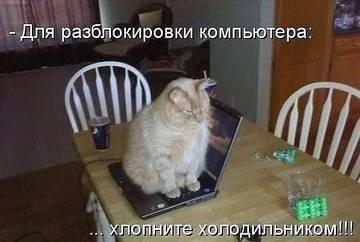 http://s2.uploads.ru/t/3m5Iz.jpg
