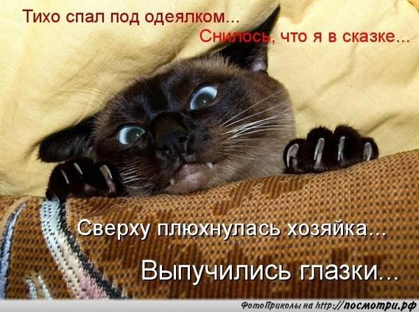 http://s2.uploads.ru/t/46g9f.jpg