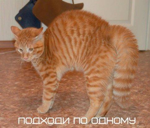 http://s2.uploads.ru/t/4Mft3.jpg