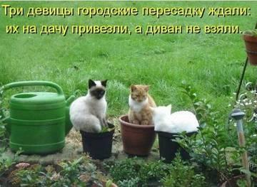 http://s2.uploads.ru/t/51sPA.jpg