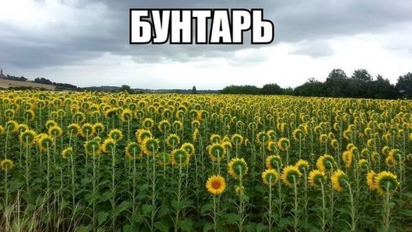 http://s2.uploads.ru/t/5jtOB.jpg