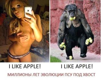 http://s2.uploads.ru/t/5tqaW.jpg