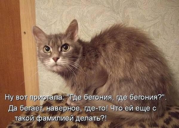 http://s2.uploads.ru/t/69zMc.jpg