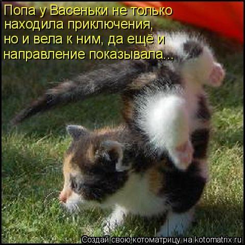 http://s2.uploads.ru/t/73poK.jpg