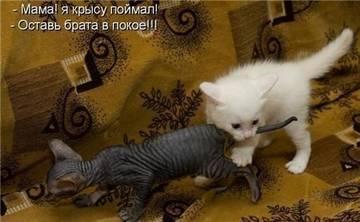 http://s2.uploads.ru/t/7pfQk.jpg