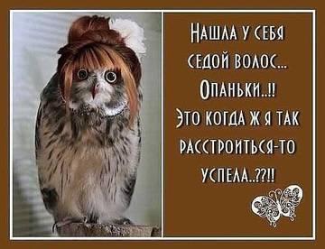 http://s2.uploads.ru/t/8tO9f.jpg