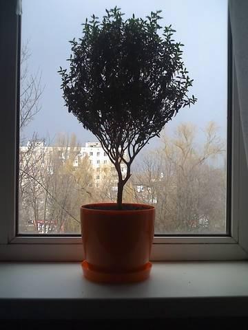 http://s2.uploads.ru/t/9xQMI.jpg