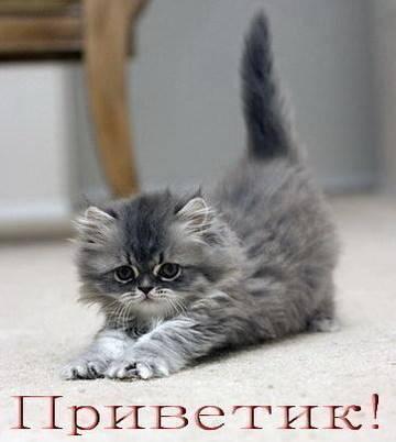 http://s2.uploads.ru/t/AP9T3.jpg