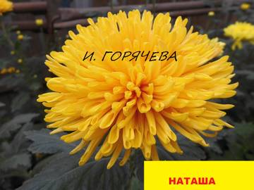 http://s2.uploads.ru/t/APRBe.jpg