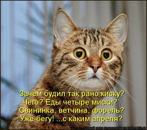 http://s2.uploads.ru/t/AVm5r.jpg