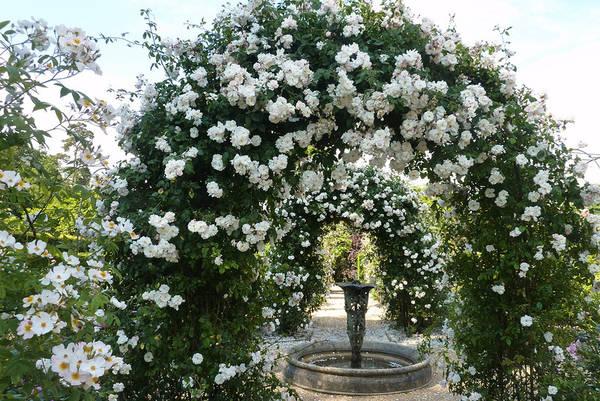 Для роз своими руками арка