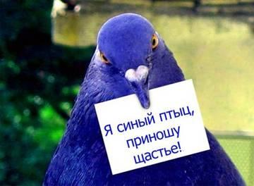 http://s2.uploads.ru/t/BYorl.jpg