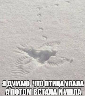 http://s2.uploads.ru/t/BukMs.jpg