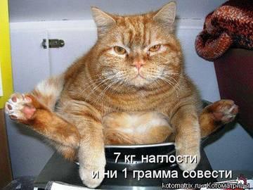 http://s2.uploads.ru/t/BxeqK.jpg