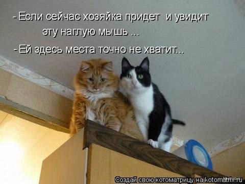 http://s2.uploads.ru/t/CQxyi.jpg