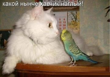 http://s2.uploads.ru/t/CX2MG.jpg