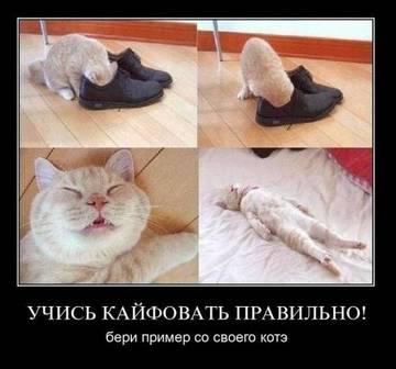http://s2.uploads.ru/t/CXqxY.jpg