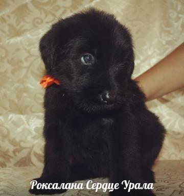http://s2.uploads.ru/t/EDHFy.jpg