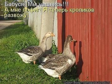 http://s2.uploads.ru/t/EMqOn.jpg