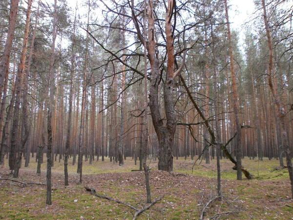 http://s2.uploads.ru/t/FUwGd.jpg