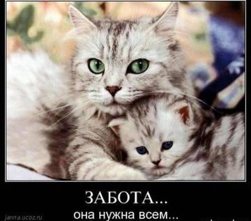 http://s2.uploads.ru/t/H9WYL.jpg
