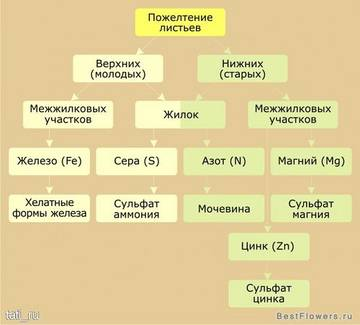 http://s2.uploads.ru/t/IdoWT.jpg