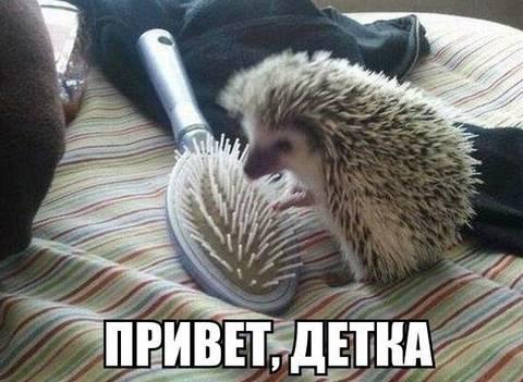 http://s2.uploads.ru/t/Ij97s.jpg