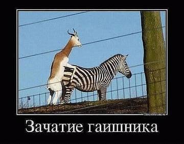http://s2.uploads.ru/t/Irla4.jpg