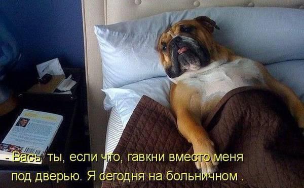http://s2.uploads.ru/t/KCT3j.jpg