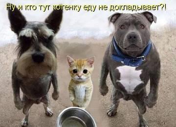 http://s2.uploads.ru/t/Knlb3.jpg