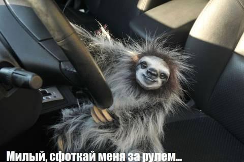 http://s2.uploads.ru/t/LZY2T.jpg