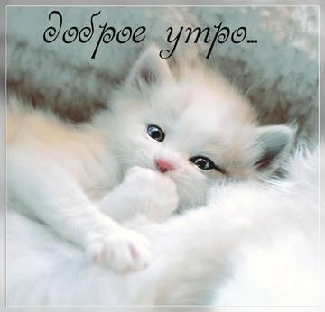 http://s2.uploads.ru/t/LyiR6.jpg