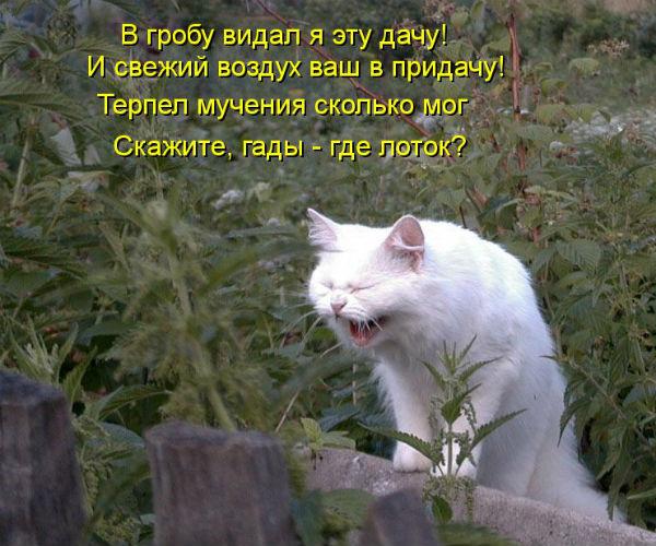http://s2.uploads.ru/t/MkSHW.jpg