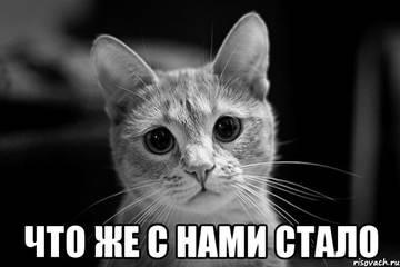 http://s2.uploads.ru/t/O5zCT.jpg