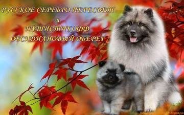 http://s2.uploads.ru/t/PL70p.jpg