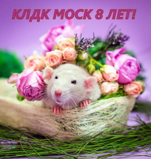 http://s2.uploads.ru/t/Pw2gk.jpg