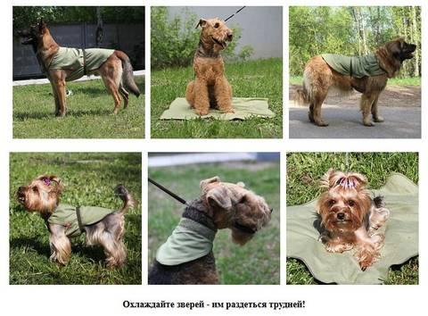 http://s2.uploads.ru/t/Qlfyx.jpg