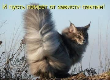 http://s2.uploads.ru/t/UcXd9.jpg