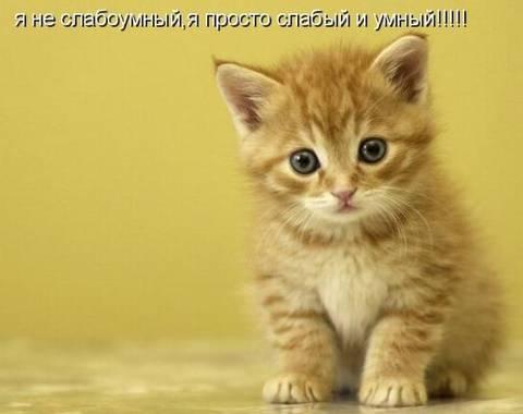 http://s2.uploads.ru/t/WB4rD.jpg