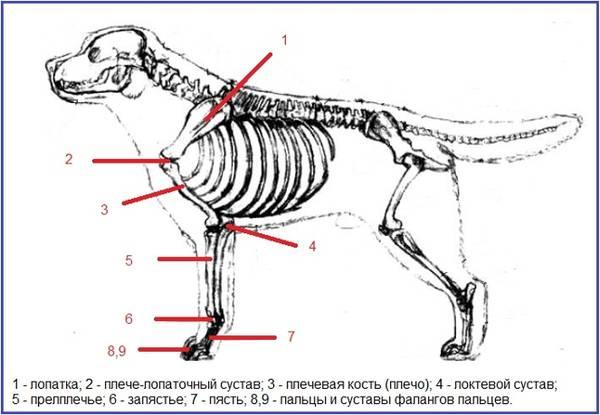 http://s2.uploads.ru/t/WmoQB.jpg